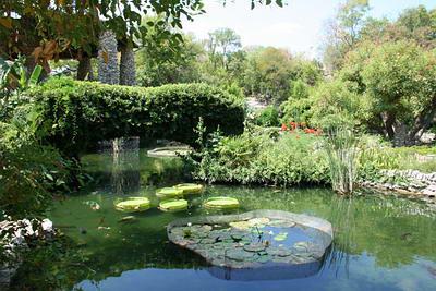 san-antonio-japanese-gardens-lily-pond.jpg